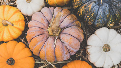 decorative photo of assorted fall pumpkins